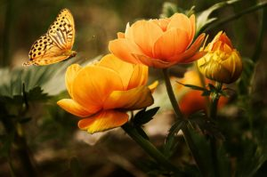 motyl przy kwiatach